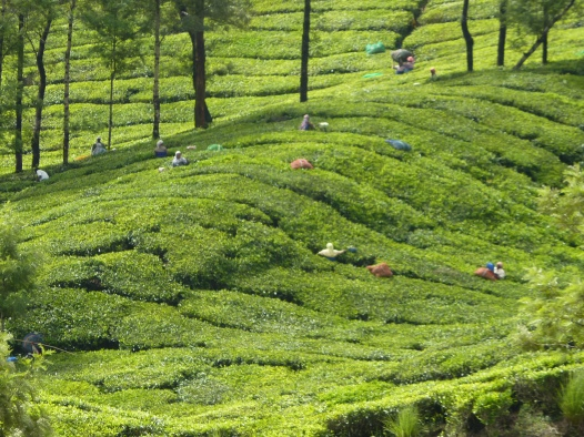 Kerala 2012 041