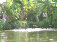 Children playing in the backwaters