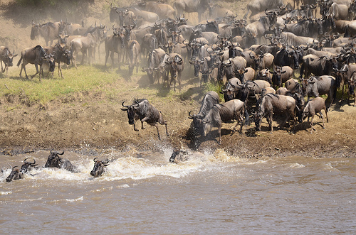 Photo taken by Thomson Safaris guest, Patti Sandoval, during her Signature Thomson Safari in October 2012