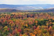 Vermont_fall_foliage_hogback_mountain photo chensiyuan