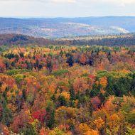 Vermont_fall_foliage_hogback_mountain photo chensiyuan