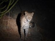 Luipaard safari Rajasthan